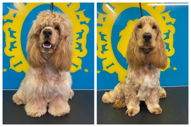 The Argus: dogs with long hair need regular haircuts to keep them tidy