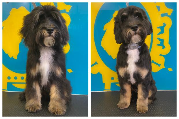 The Argus: Some dogs had gone a long time without having their hair cut