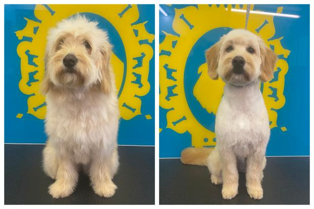 The Argus: People Can Also Be Trained To Be Dog Groomers At Bone Idol
