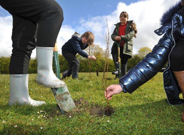 Children at Pelton Community Primary School, Pelton, County Durham planting 400 trees